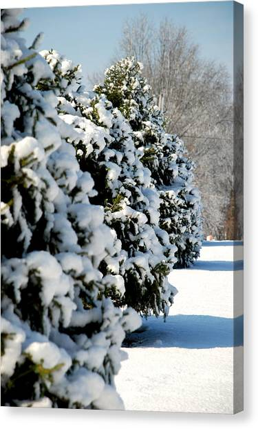 Snow In The Trees Canvas Print