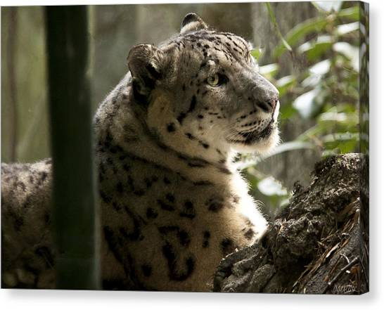 Leapords Canvas Print - Snow Leopard 2 by Alissa Dasta Coletta