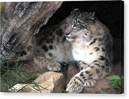 Leapords Canvas Print - Snow Leopard In Shade by Larry Small