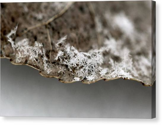 Snow On A Leaf Canvas Print