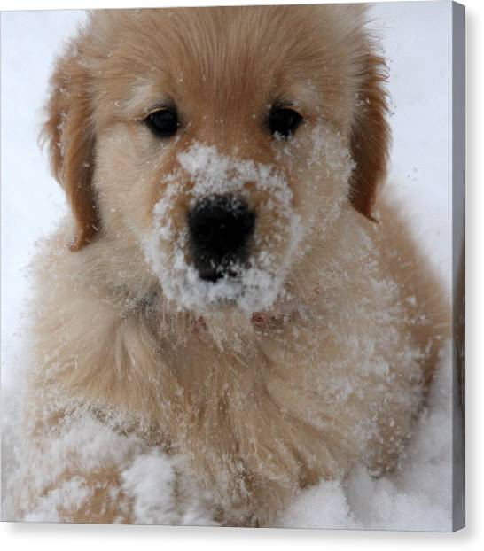 Snow Puppy Canvas Print