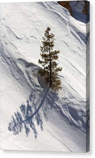 Snow Shadow Canvas Print
