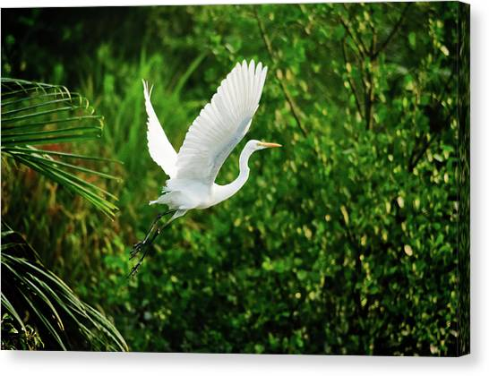 Mangrove Trees Canvas Print - Snowy Egret Bird by Shahnewaz Karim