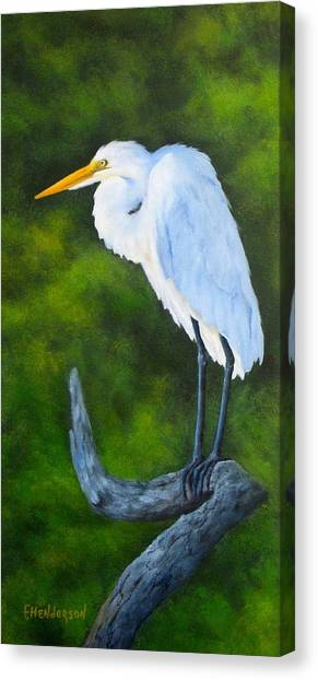 Snowy Egret Canvas Print by Francine Henderson