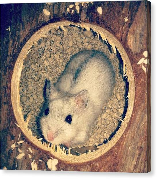 Mice Canvas Print - Snowy Is Staying In Her Room. She Still by Zachary Voo