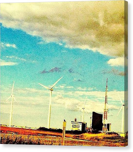 Foxes Canvas Print - So West Coast. #windmills by Rachel Fox Burson