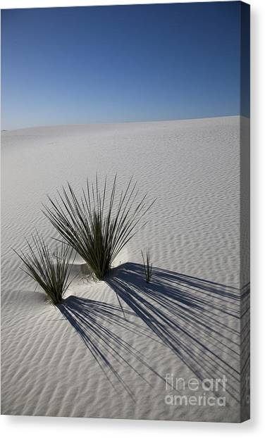 Sandy Desert Canvas Print - Soaptree Yuccas On White Sands by Greg Dimijian
