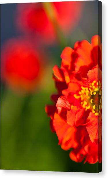 Soft Red Flower Canvas Print