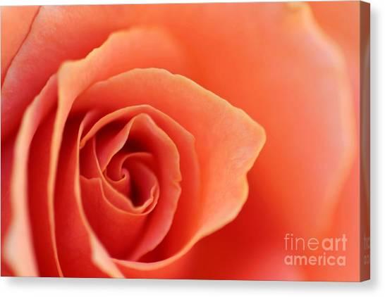 Soft Rose Petals Canvas Print
