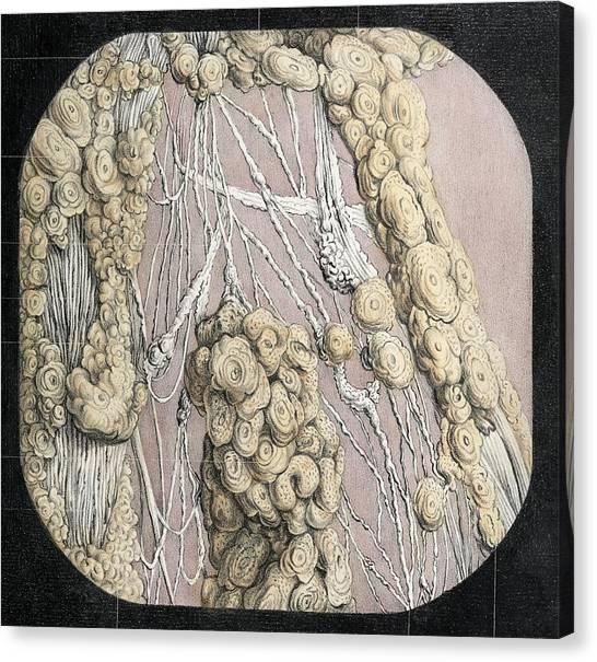 Celiac Plexus Canvas Prints Fine Art America