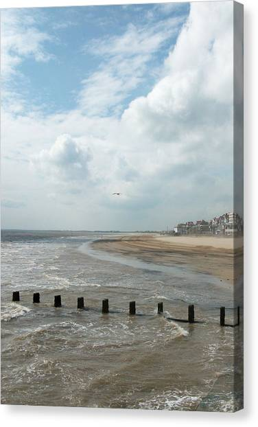 Solitary Seagull Canvas Print