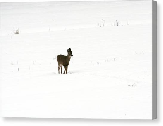 Solitude Canvas Print by Shirley Mailloux