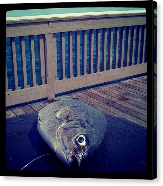 Largemouth Bass Canvas Print - Someone Left Their Bait..! #bait #fish by Emily W