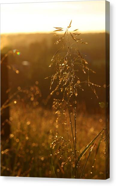 Ohio Valley Canvas Print - Something Beautiful by Monica Lahr