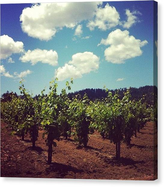 Winery Canvas Print - Sonoma County Vineyards by Crystal Peterson