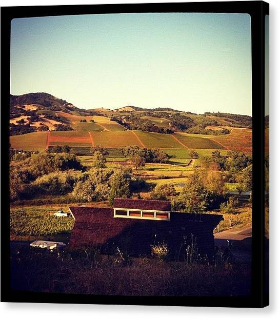 Vineyard Canvas Print - Sonoma Valley Mountains by Crystal Peterson