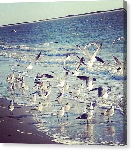 Seagulls Canvas Print - #southcarolina #seagulls by Melissa Wyatt