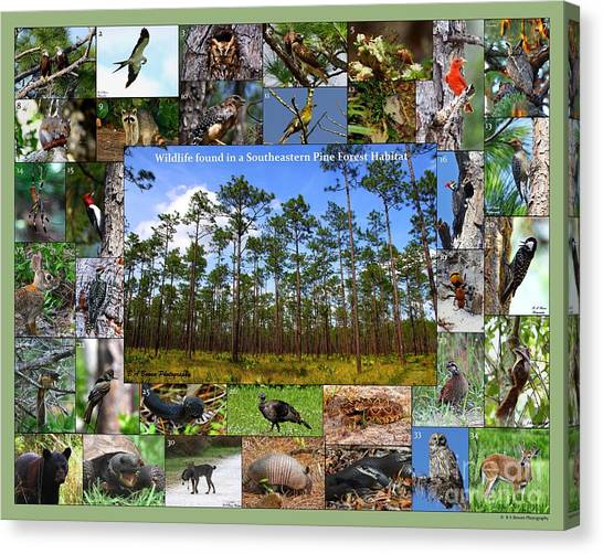 Southeastern Pine Forest Wildlife Poster Canvas Print