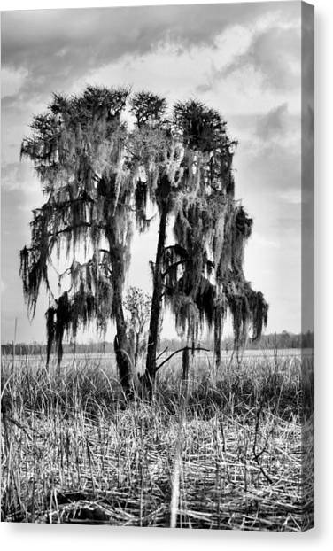 Cape Lily Canvas Print - Southern In Black And White by JC Findley