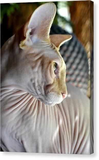 Sphynx Cats Canvas Print - Sphynx In Profile by Fraida Gutovich