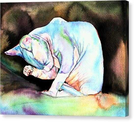 Sphynx Kitten Canvas Print