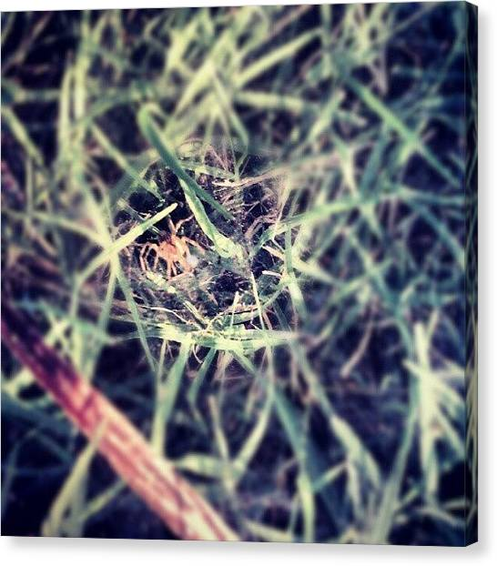 Outer Space Canvas Print - Spider At Sunset In It's Grass Web by Alien Alice