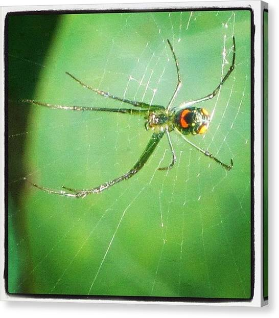 Spiders Canvas Print - #spider #instabug #florida #staticage by Michael Hughes