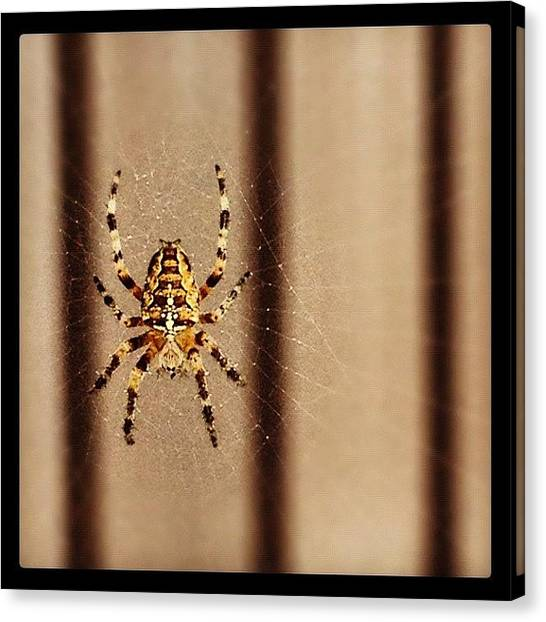 Legs Canvas Print - Spider by Isabel Poulin