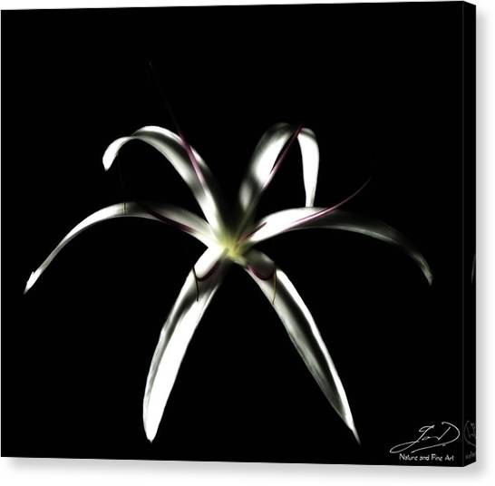 Spider Lily Canvas Print by Ian Dean
