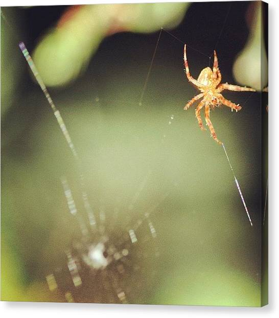 Spider Web Canvas Print - Spider Macro by Harington