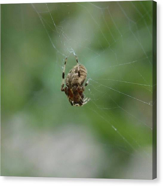 Spider Web Canvas Print - #spider #macro #nature #web by Austin Engel