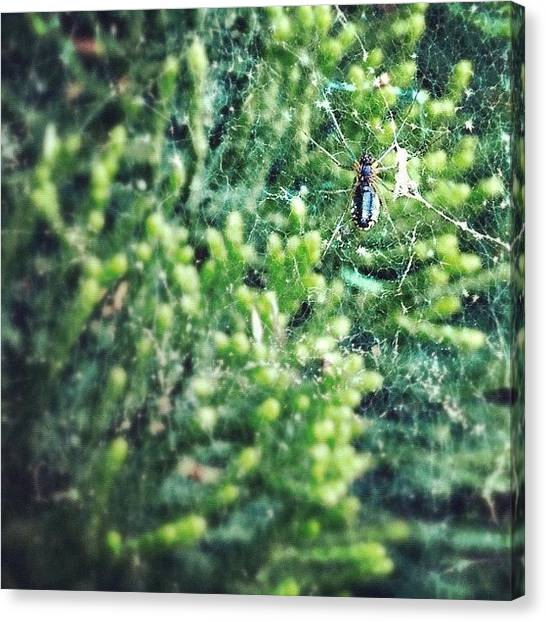 Spiders Canvas Print - #spider Using Purely #iphoneography by Manan Shah