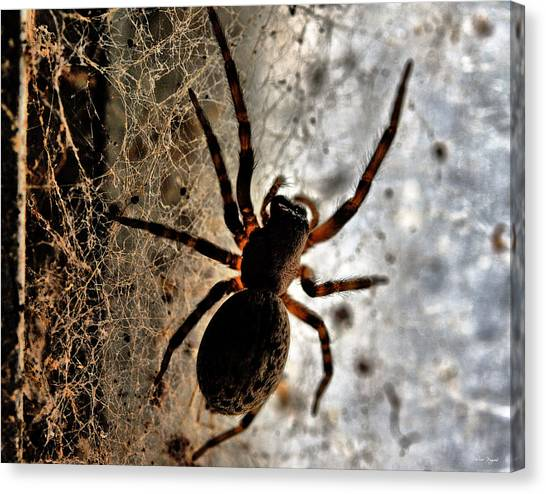 Spiders Home Canvas Print