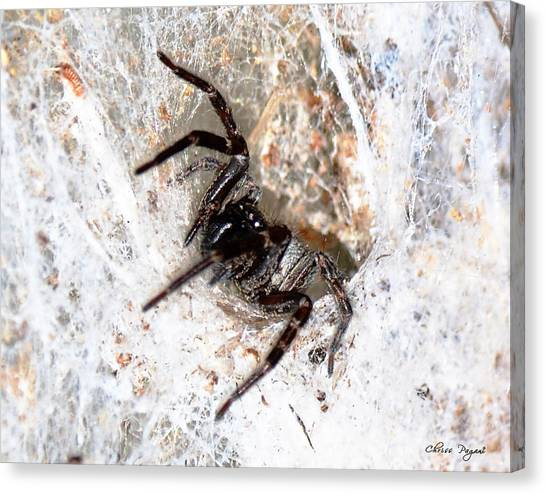 Spiders Trap Canvas Print
