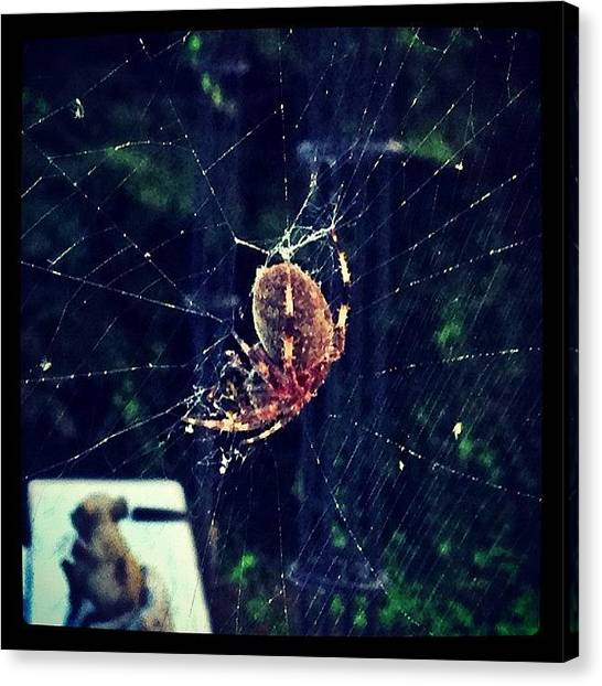 Spider Web Canvas Print - Spidey Is Still Eating His Bee A Whole by Jesse OConnell