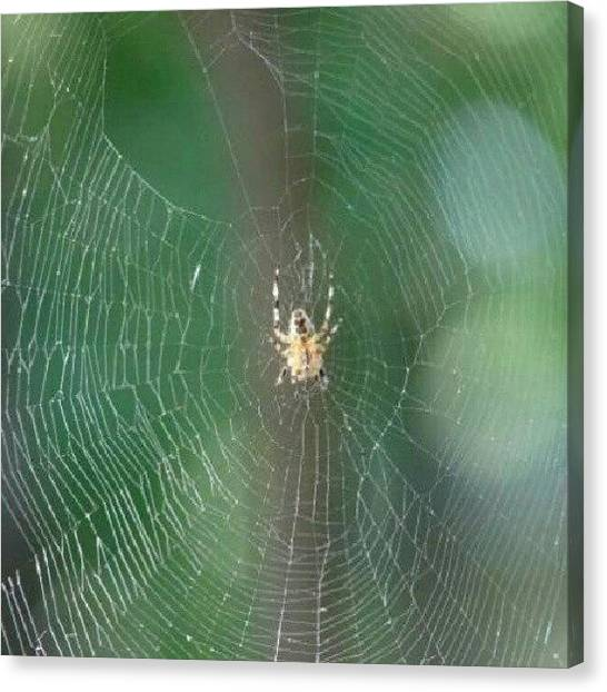 Spider Web Canvas Print - Spideys Looking For Some Food. #nature by Kegan Piper
