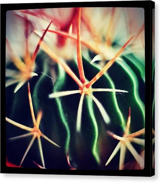 Plant Canvas Print - #spikes #green #plant #igaddict by Ritchie Garrod