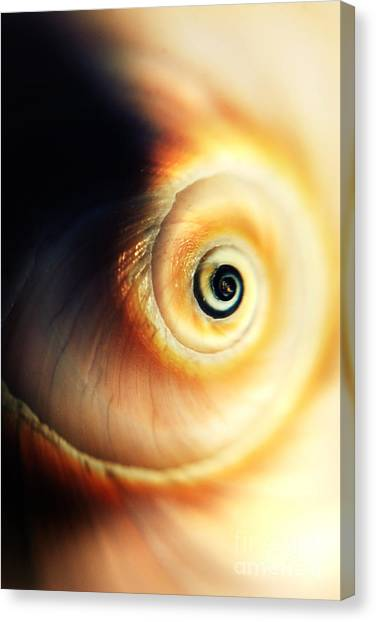Fibonacci Canvas Print - Spiral by HD Connelly