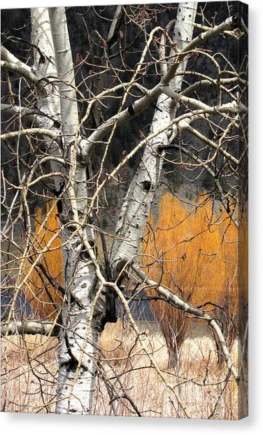 Splash Of Fall Canvas Print by Frank Townsley