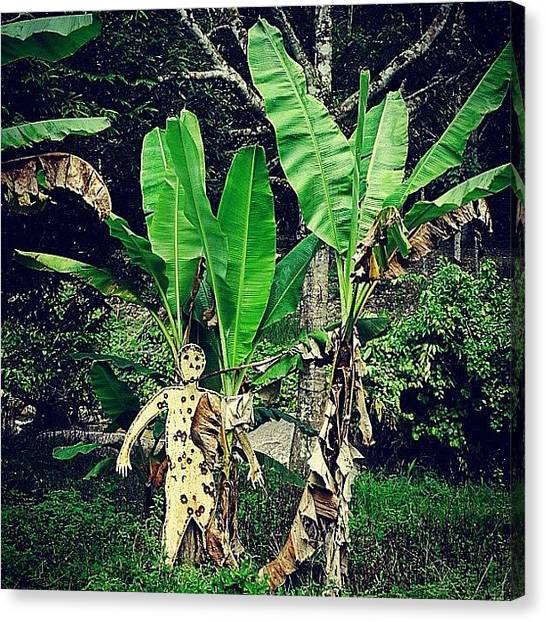 Jungles Canvas Print - Spot The 🎯 by Kokky Lawrence