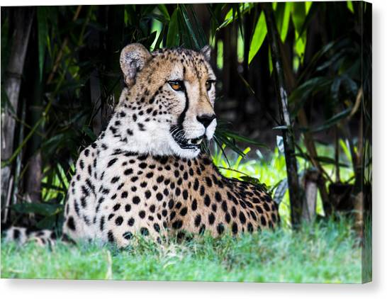 Spotted Canvas Print by Nicholas Evans
