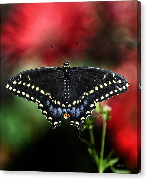 Spread The Wings Canvas Print