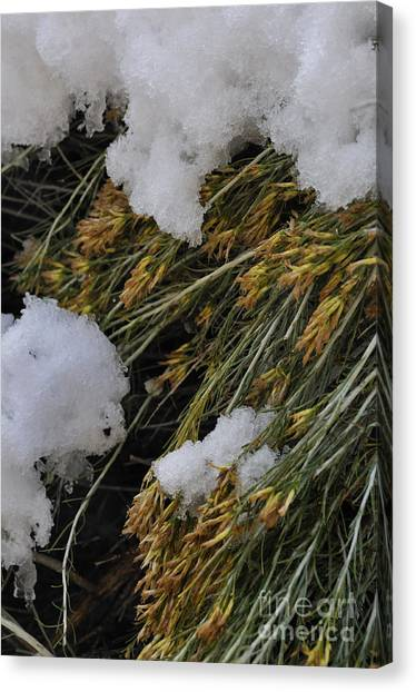 Spring Arrives Canvas Print