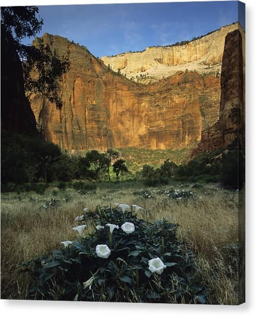 Spring At Big Bend Canvas Print