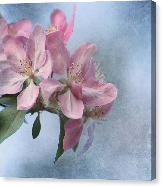 Breast Cancer Canvas Print - Spring Blossoms For The Cure by Kim Hojnacki