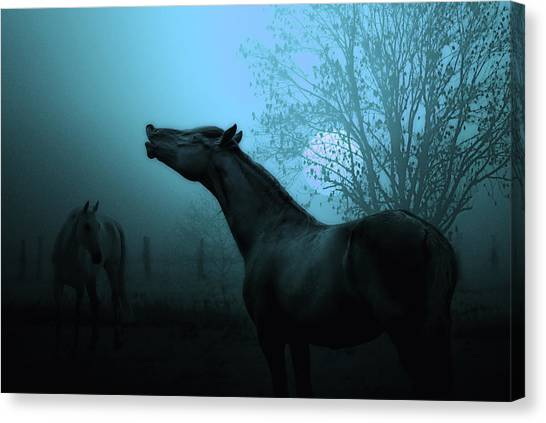 Black Stallion Canvas Print - Spring Breeze by Joachim G Pinkawa