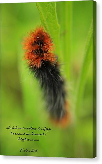 Spring Caterpillar Canvas Print