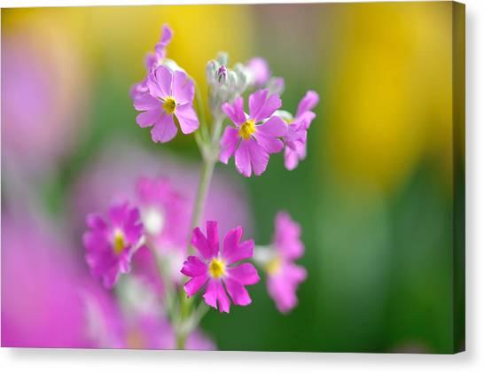 Spring Flower Canvas Print by Myu-myu