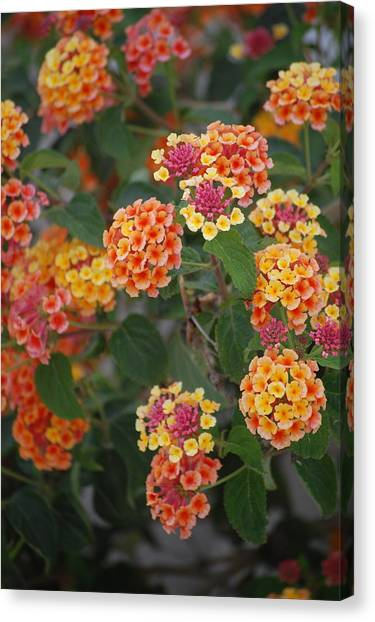 Spring Flowers Canvas Print by Dickon Thompson