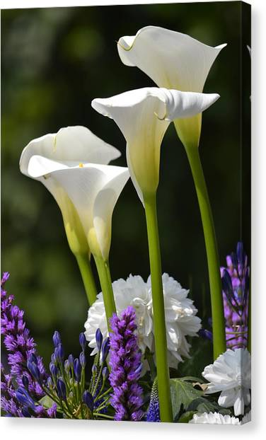 Spring Lillies Canvas Print by Dickon Thompson